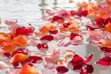 Rose Petals In The Water