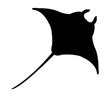 Manta In Vector On White Background