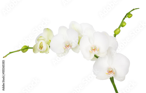 In de dag Orchidee white orchid isolated on white background