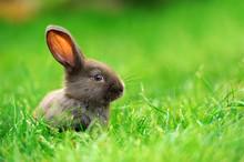Little Rabbit In Grass