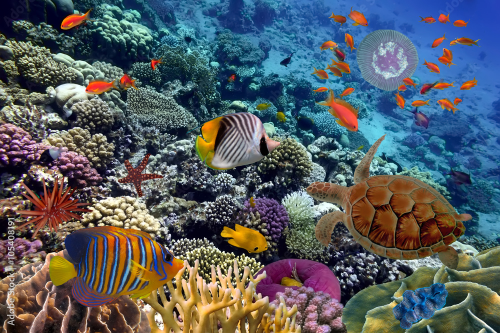 Kolorowa Rafa Koralowa Z Wielu Ryb I żółwia Morskiego