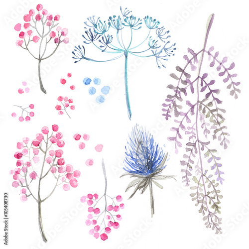 A set of herbs and flowers hand-painted watercolor. Botanical drawings. Flowers on a white background. - 105408730