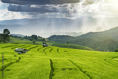 Deurstickers Rijstvelden Pa Bong Piang rice paddy field in Chiang mai Thailand