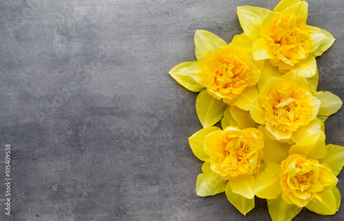 Deurstickers Narcis Yellow daffodils on a grey background. Easter greeting card.