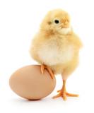 Fototapeta Zwierzęta - chicken and egg