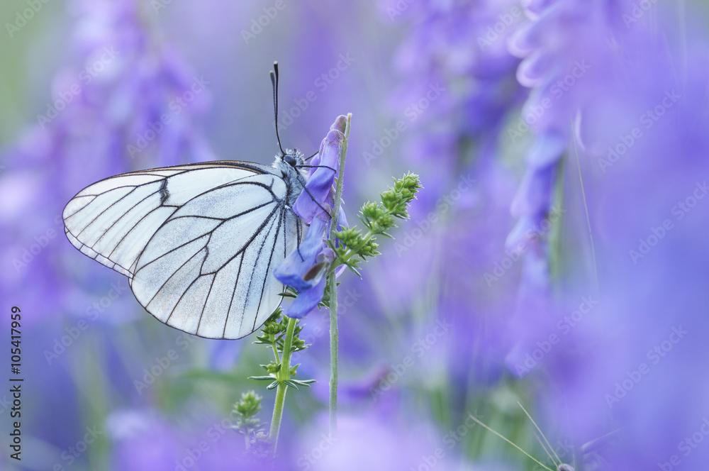 Fotografie, Obraz  Mariposa en primavera
