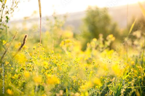 Fotografía  Beautiful rural landscape with sunrise over a meadow. Soft focus