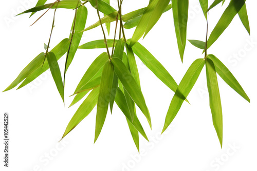 In de dag Bamboo green bamboo leaves and branches isolated on white background Die cutting