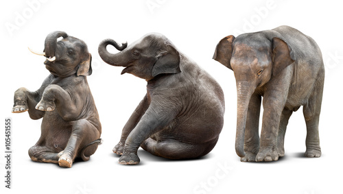 Poster de jardin Elephant Baby elephant isolated