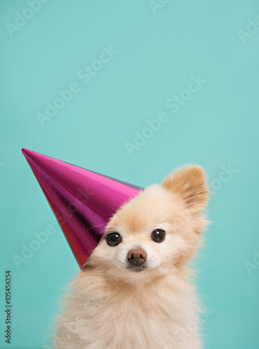 Dog With Birthday Hat At Blue Background