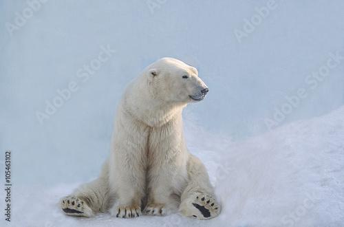 Obrazy na płótnie Canvas Белый медведь сидит.