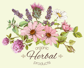 FototapetaVector vintage hand drawn composition with wild flowers and herbs. Design for cosmetics, store, beauty salon, herbal tea, natural and organic products. Can be used like a greeting card.