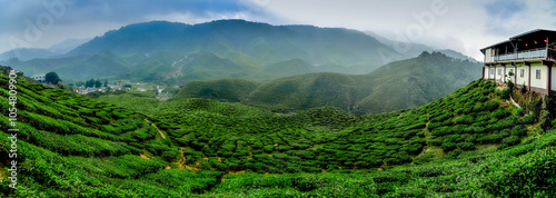 Foto auf Gartenposter Hugel wide view the beautiful tea plantation at Cameron Highland, Malaysia. Hill curve and slope with fog, cloudy sky with cropped image restaurant.