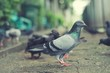 Side pigeon,Bird close up,Blurred crowd,Colorful art
