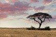canvas print picture Large Acacia tree in the open savanna plains Africa
