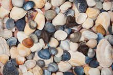 Collection Of Seashell For Background, Natural Macro Texture, Top View