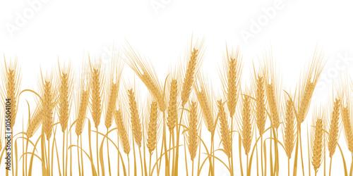 Fotomural Ears of wheat horizontal border seamless pattern