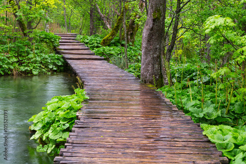 Fototapety, obrazy: Wood path in the Plitvice national park