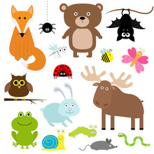 Forest Animal Insect Set. Bear...