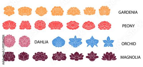 Photo  Dahlia, magnolia, orchid, gardenia, peony flower colorful collec