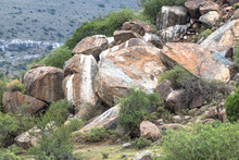 Boulders Coloured White By Rock Hyrax Urine