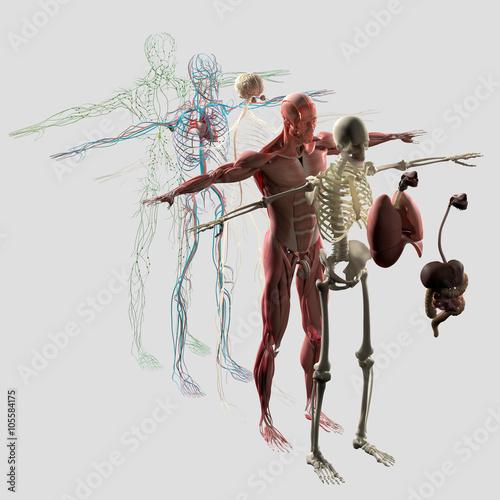 anatomia-czlowieka-eksplodowala-zdekonstruowana-oddzielne-elementy-miesni-kosci-narzadow-ukladu-nerwowego-ukladu