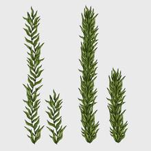Two Seaweed, Classic Underwate...