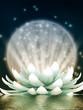 Beautiful lotus, meditation