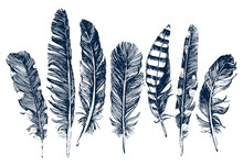 Hand Drawn Feathers On White B...