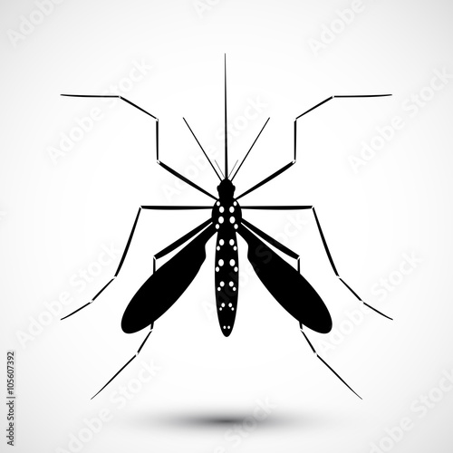 Photo  Mosquito vector