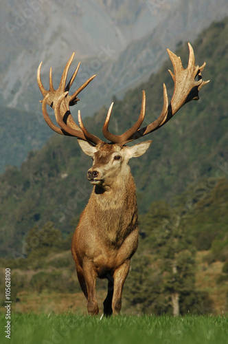 21 pointer Wall mural