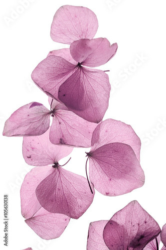 romantic flowers petal close up