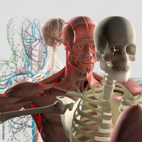 widok-rozstrzelanej-anatomii-czlowieka-zdekonstruowany-pokazujacy-oddzielne-czesci-miesnie-narzady-kosci-kreatywne