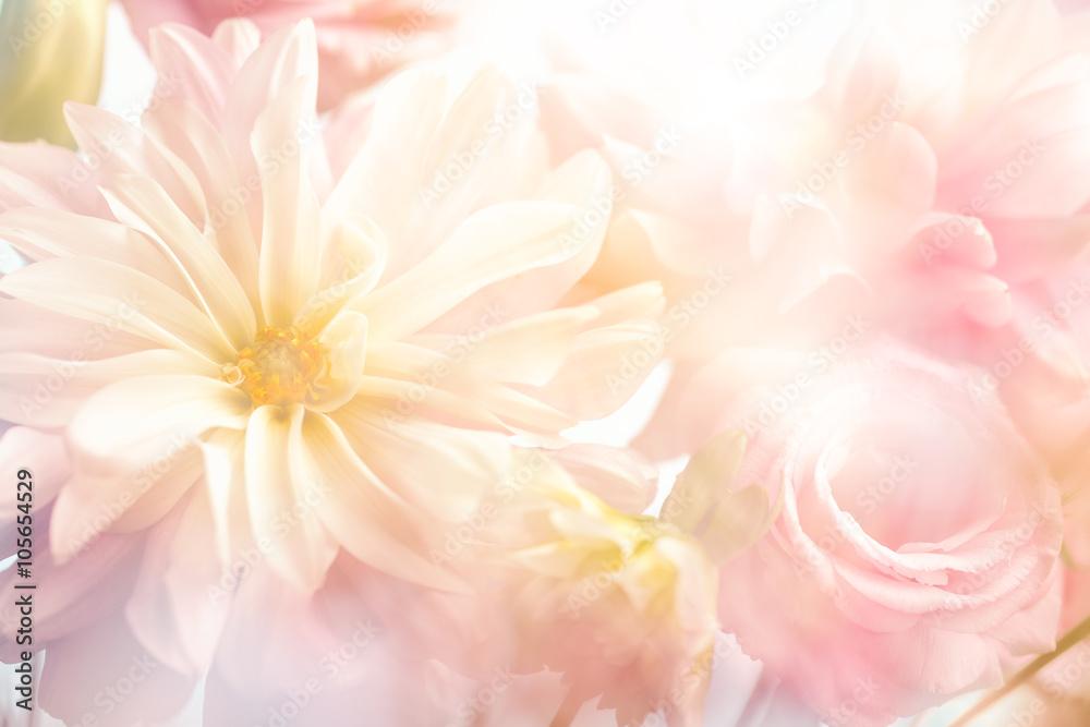 Fototapety, obrazy: Pink peony flower background