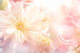 Fototapeta Kwiaty - Pink peony flower background