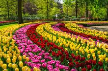 Beautiful Spring Flowers In Ke...