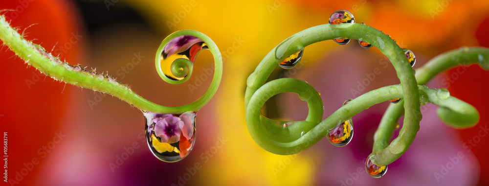 Fototapety, obrazy: flower and dew drops