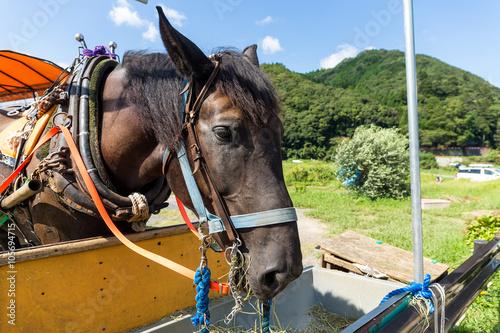 Deurstickers Ezel Horse in farm