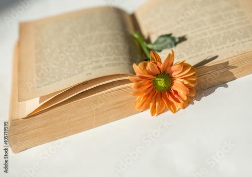 Obraz Stara książka i kwiat. - fototapety do salonu