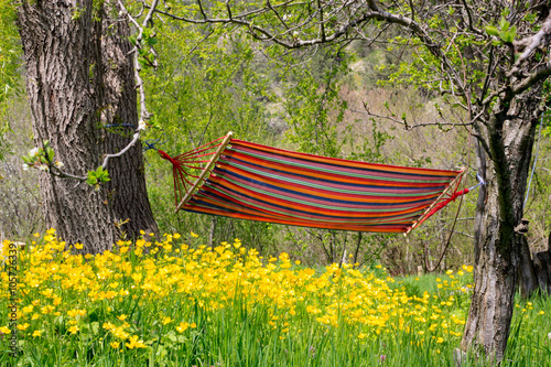 Landscape in the countryside. Flowers and hammock