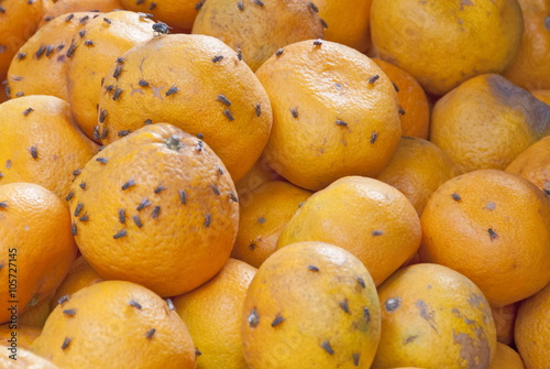 Rotten oranges in a market of Mui Ne, Vietnam.