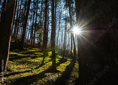 Fototapeta Der Frühling und Sommer kommt im Wald obraz na płótnie