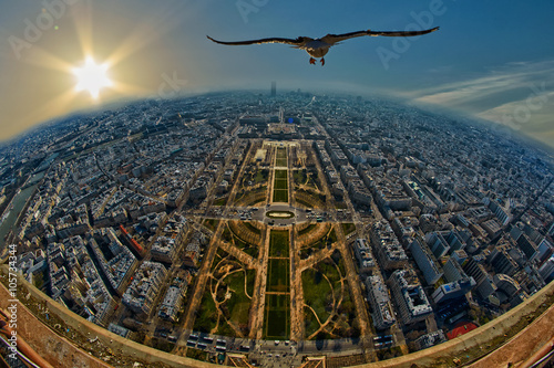 obraz lub plakat Seagull flying over Mars Field in Paris, France