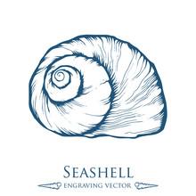 Seashell, Sea Shell, Nature Ocean Aquatic Underwater Vector. Hand Drawn Marine Engraving Illustration On White Background