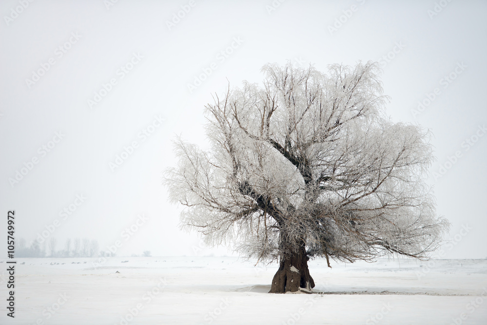 Tree in a winter time