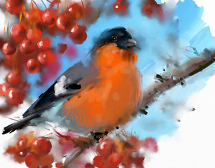 Fototapeta Painting. Bullfinch on a mountain ash