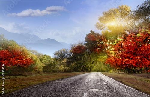 Foto op Canvas Herfst Road, asphalt, autumn