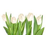 Fototapeta Tulipany - Isolated tulip frame. EPS 10