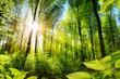 Leinwanddruck Bild - Sonnenbeschienene Laubbäume im Wald