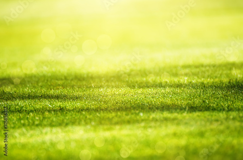 Tuinposter Zwavel geel Sunny green grass field suitable for backgrounds or wallpapers, natural seasonal landscape